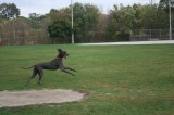 The other dog was jumping around with most paws off the ground!-Highslide JS